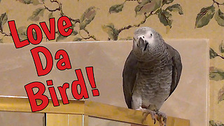 Romantic parrot loves himself and others - Video