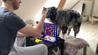 Smart dog plays full round of Connect Four against his owner