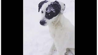 Rescue dog goes bonkers for snowy playtime - Video