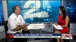 Ask Dr. Joe: Answering your pet questions