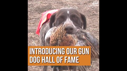 Introducing Our Gun Dog Hall of Fame