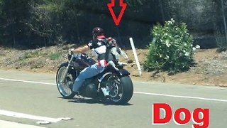 Patriotic Biker Straps His Dog to Motorcycle on 4th of July - Video