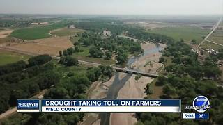 Drought taking toll on farmers - Video