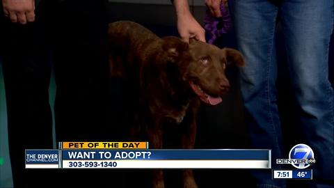 Pet of the day for September 23rd