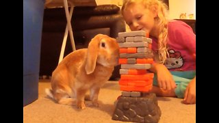 Bunny rabbit plays Jenga with little girl - Video