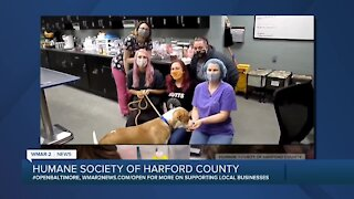 Importance of spaying/neutering from Humane Society of Harford County
