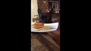 Smart Frenchie chooses healthy dish over fast food - Video
