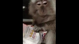 Monkey Makes Warning Sound When She Hears Thunder - Video