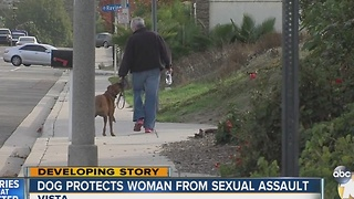 Woman sexually assaulted in Vista, pit bull rescues her - Video