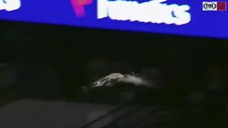 Goose gets loose, hits scoreboard at Tigers game in Detroit - Video