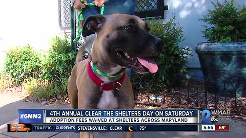 Adoption fees waived Saturday for Clear the Shelters Day