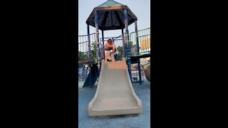 Dog's first ride down a slide is an adorable success