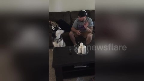 Husky sings along with owner playing the harmonica