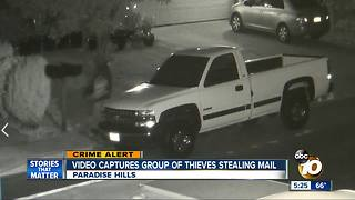 Video captures groups of thieves stealing mail in Paradise Hills - Video