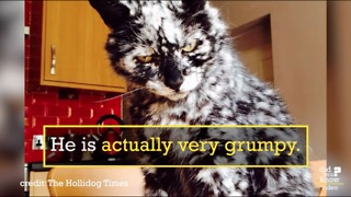 Scrappy The Cat - The Kitty With The Amazing Fur - Video