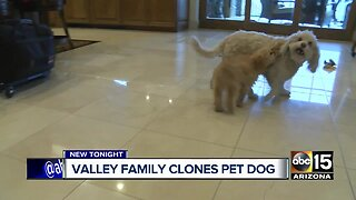 Valley family clones pet dog