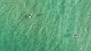 Nice To Eat You! Dad-Of-Two Captures Heart-Stopping Drone Footage Of Shark Swimming Up To Surfer