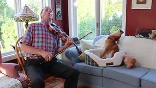 Amazing Violin And Dog Duet - Video