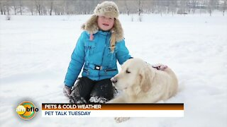 PET TALK TUESDAY - PETS AND THE COLD WEATHER