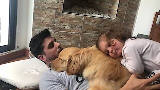 This sweet Golden Retriever gets love from the entire family