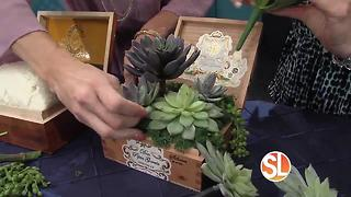 Learn how to create beautiful succulents for your home - Video