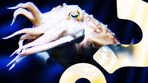 HowStuffWorks NOW: Cuttlefish Can Count to Five | HowStuffWorks NOW