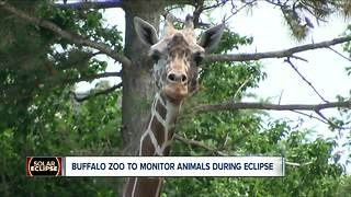 Buffalo Zoo and the eclipse - Video