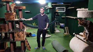Purr-fect play area! Devoted brother spends £12,000 turning basement into ultimate cat jungle