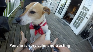 Dog has the  personality every owner wants  - Video