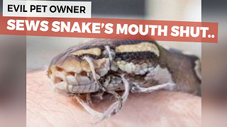 Abused Snake Discovered With It's Mouth Sewn Shut - Video