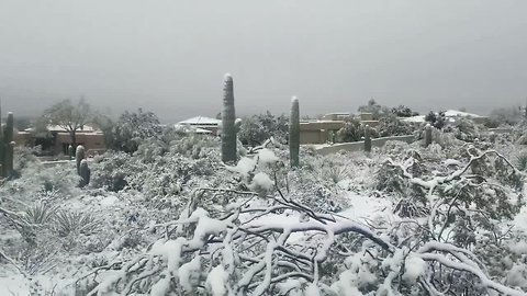 Heavy snow turns Arizona desert into eerie winter landscape