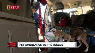 Pet ambulance to the rescue