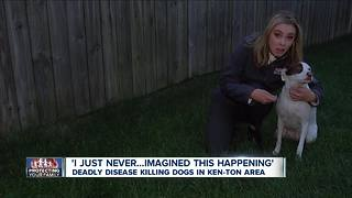 Deadly disease killing dogs in Kenmore area