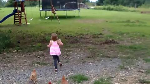 Pack Of Chickens Chases A Little Girl