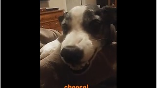 Friendly Dog Says 'Cheese' For The Camera - Video