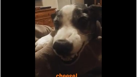 Friendly Dog Says 'Cheese' For The Camera