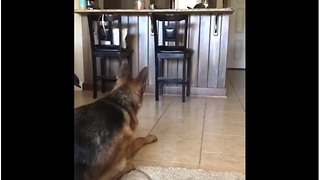 Cat Loves Teasing Dog In A Game Of Hide And Seek