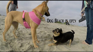 Freedom!..Dog Beach is open
