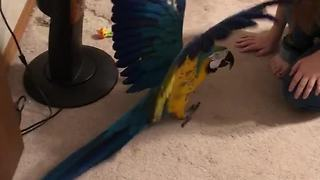 Parrot very protective of her toy puppy - Video