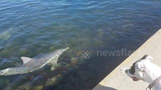 Very Australian man and dog react to seeing dolphins close to shore