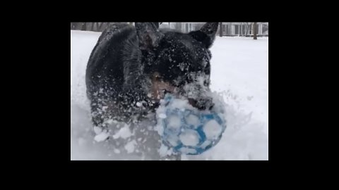 Otto the Dog Plays in Buffalo Snow as Winter Storm Approaches