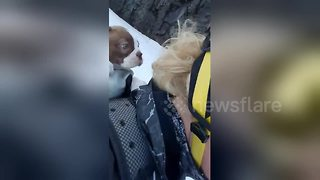 Too cute! Puppy goes snowboarding with owner - Video