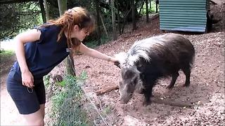 Bushpig can't resist a scratch behind the ear - Video