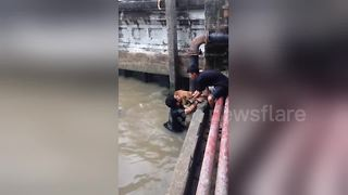 Brave Teenagers Rescue Stray Dog Stranded In Dirty Canal - Video