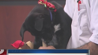 Veterinarian Dr. Joe visits midday - Video