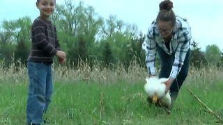 Family fighting Waukesha County over pet ducks, chickens