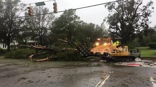 Loader pushes massive downed tree out of street after Florence - Video