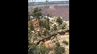 Moose in the Grand Canyon