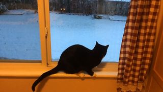 Cat Amazed By Snow - Video