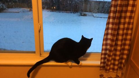 Cat Amazed By Snow